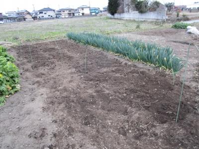 20200307家庭菜園03