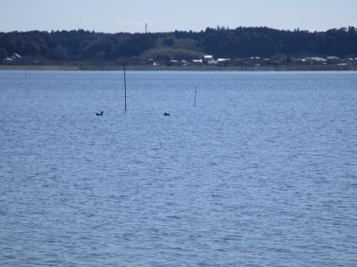 20200315海釣り(練習と視察)三柱神社付近06(右側杭あたりに投げられるとライン100m放出か)