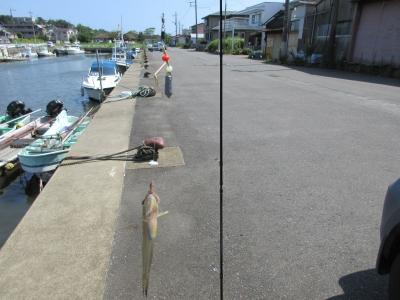 20200806汽水域釣り03-2(1匹目)