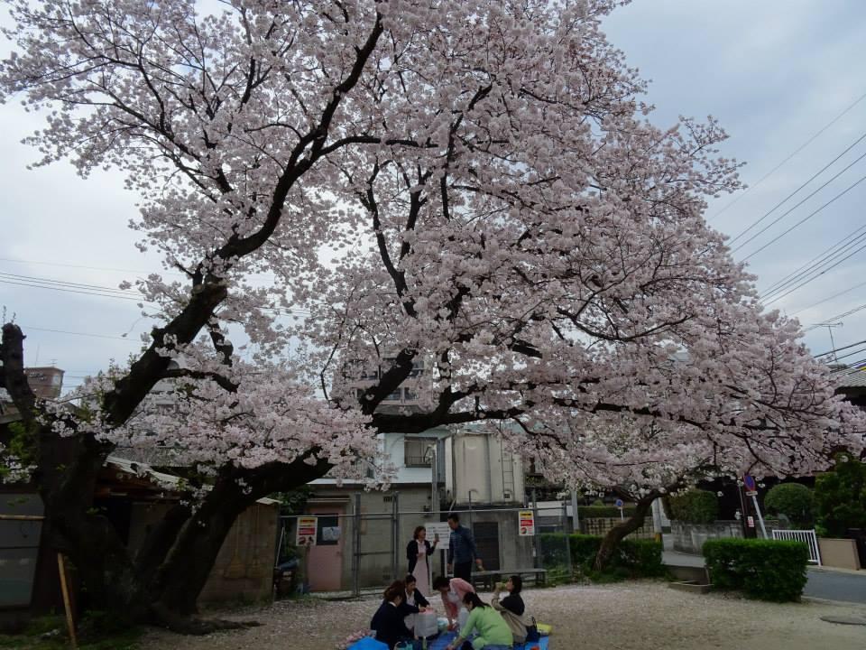 花見2015.4.1