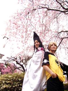 桜でよみうり〜