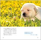 1506_犬セラピー_本文