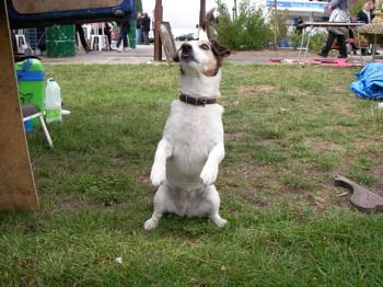 イギリスの犬 アンティークマーケット Newark DMG