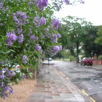 ロンドンの雨