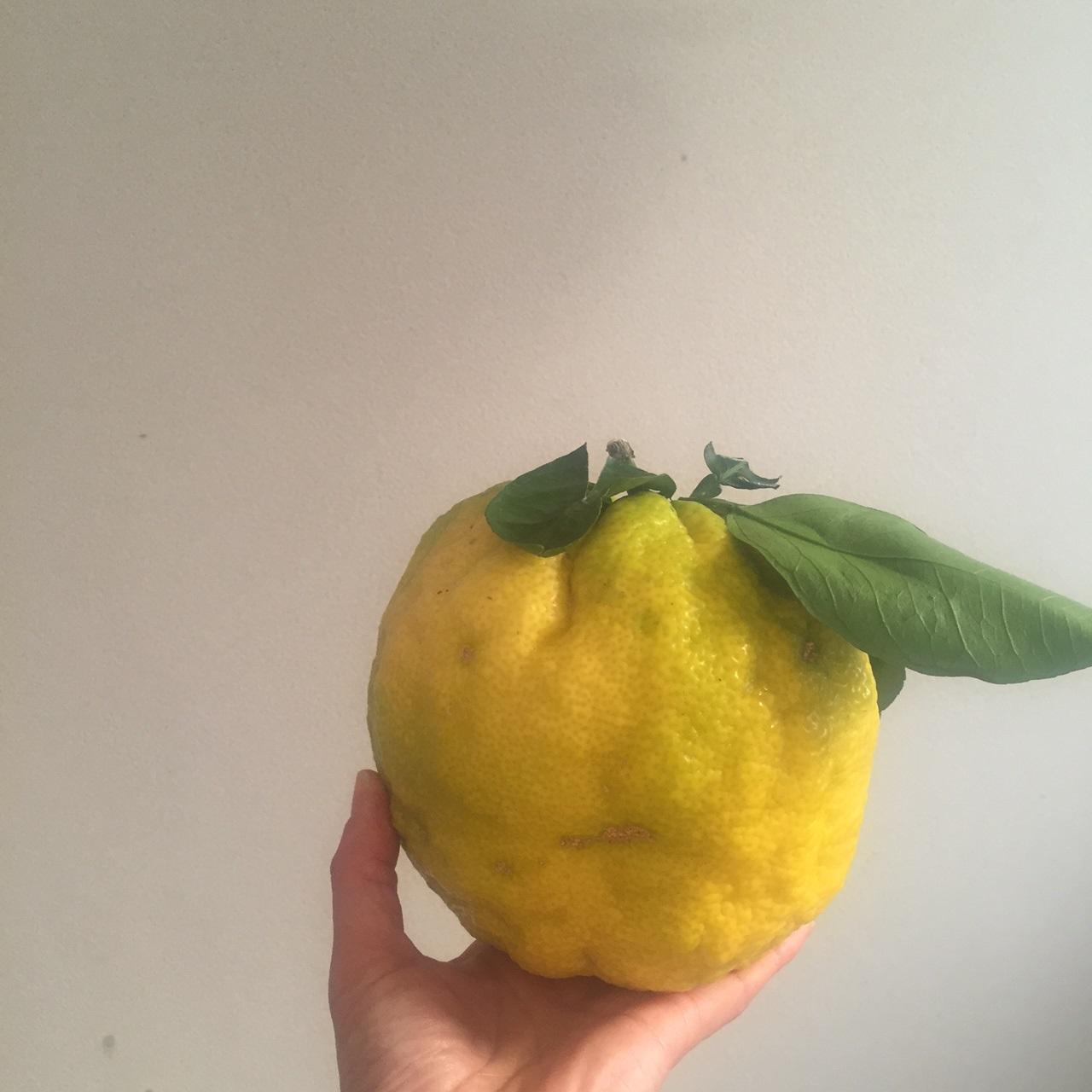 獅子柚子 柚子 柚子ジャム