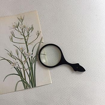 昭和の拡大鏡 虫眼鏡