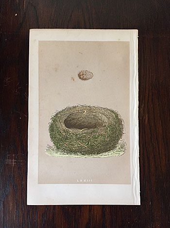 エッグポスター 1875年にイギリスの鳥類学者 「Francis Orpen Morris」によって、発刊された鳥類図鑑