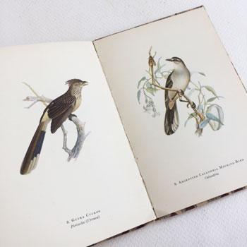 1952 LONDON PENGUIN BOOK Birds of La Plata cover by Sarah Nechamkin   バードブック アンティークバードポスター antique bird card