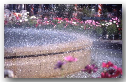 噴水にかすむコスモス