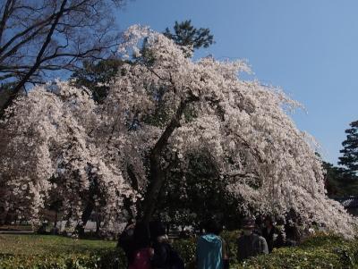 京都御苑2