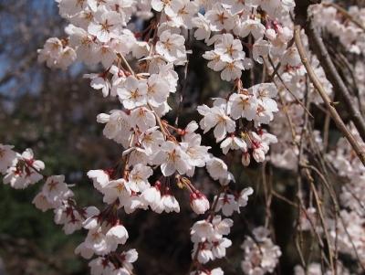 京都御所9