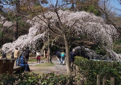 京都御所10