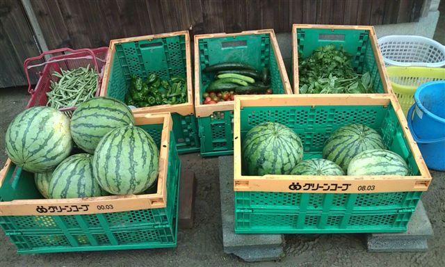 収穫したお野菜たち
