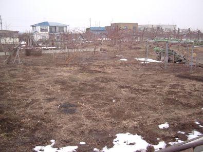 campo di frutta