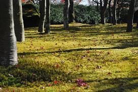 a garden in Hakone museum