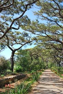 south daito island