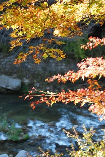 autumn color of leaves in okutsukei
