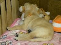 みんなこうしてライオンの縫いぐるみにくっ付いて寝ますね〜(^^)