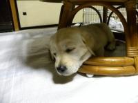 青君、いっぱい遊んで疲れたね(^^)