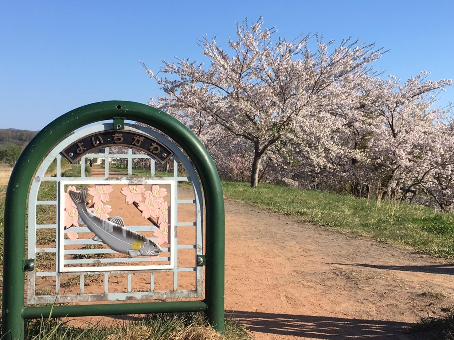 余市川桜並木 with 川名プレート_190505.JPG