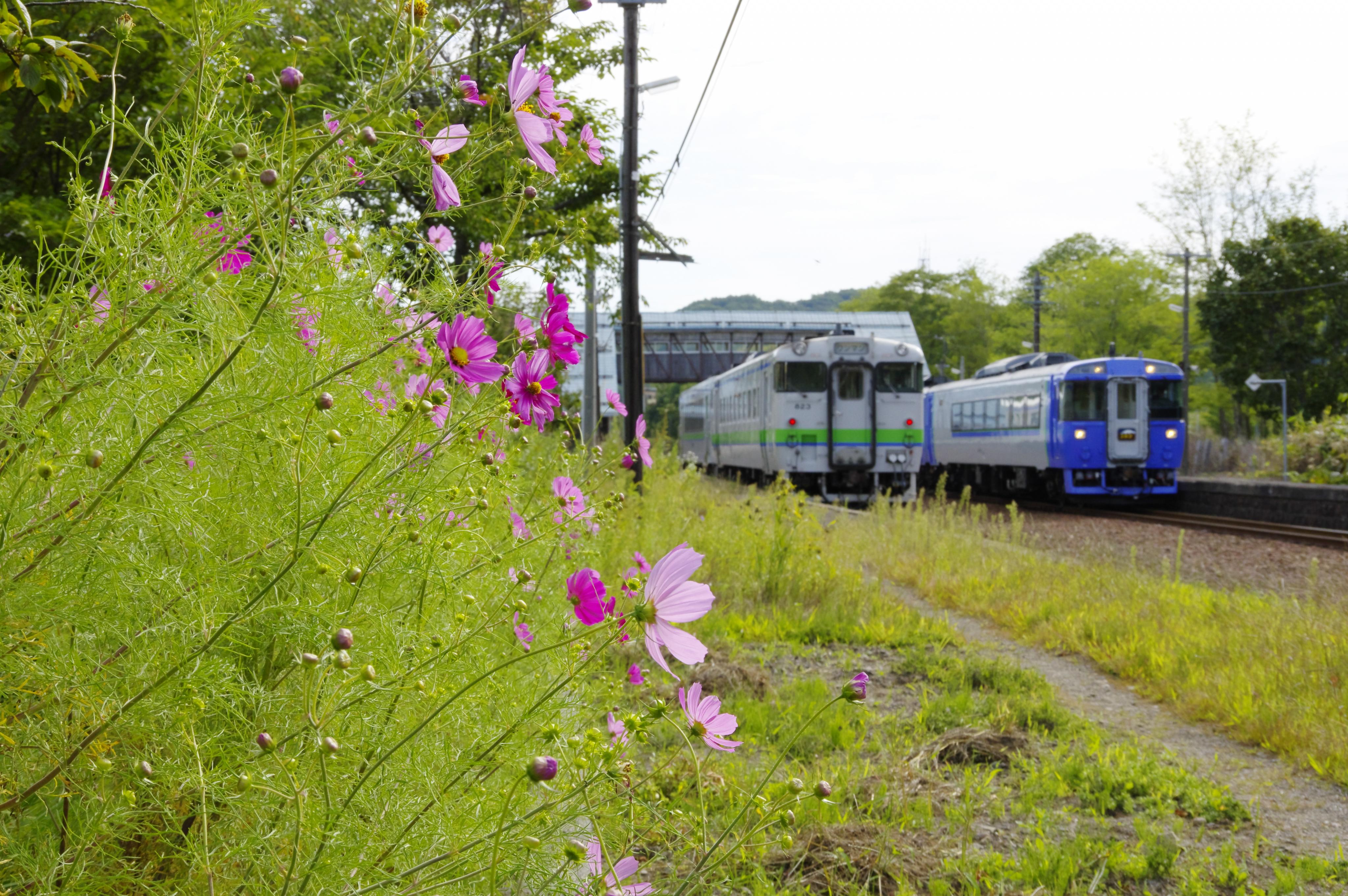 キハ150+40+特急ニセコ号 蘭島駅 190905.jpg