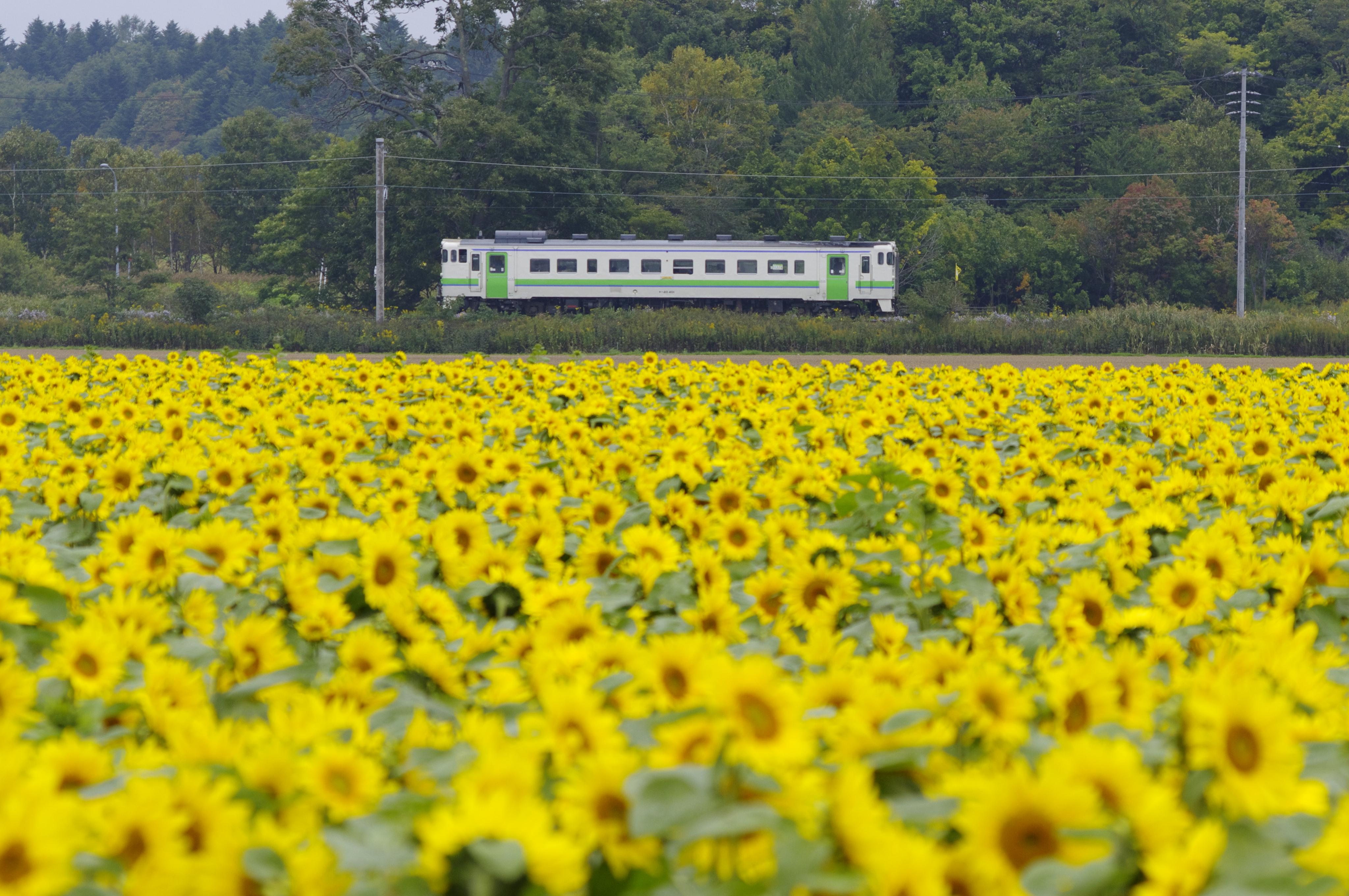 キハ40 5426D 北海道医療大学前−石狩当別_190928.jpg