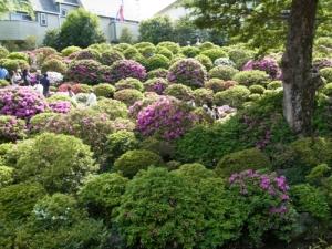 つつじ祭り 根津神社