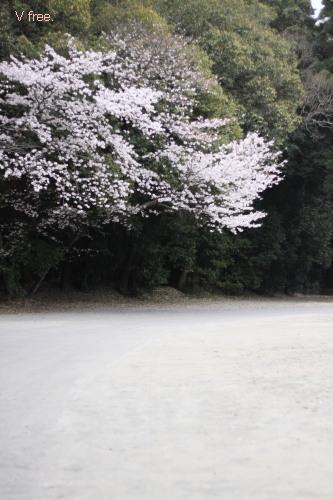 宮崎神宮西神苑