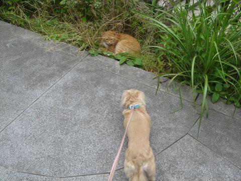 cat&madu1