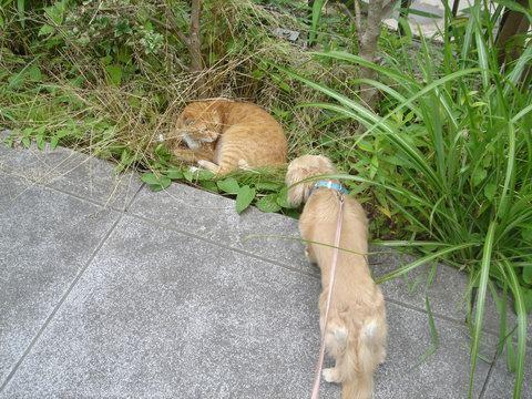 cat&madu2