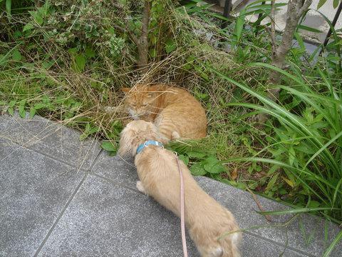 cat&madu3