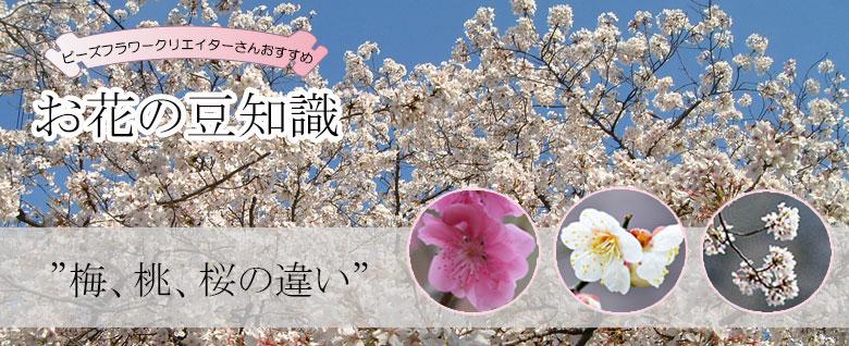 梅、桃、桜の違い