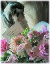 flower_aoi