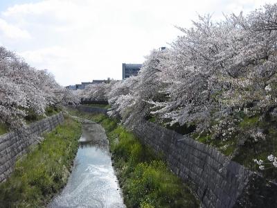 山崎川下流側
