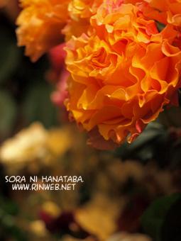 ラ・カンパネラ「カーネションと間違えちゃうネ」 花屋 空に花束