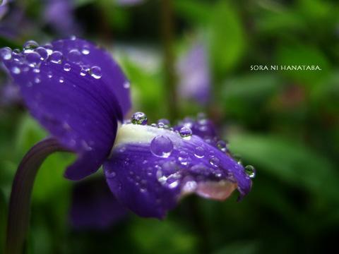 雨が上がった。一瞬。