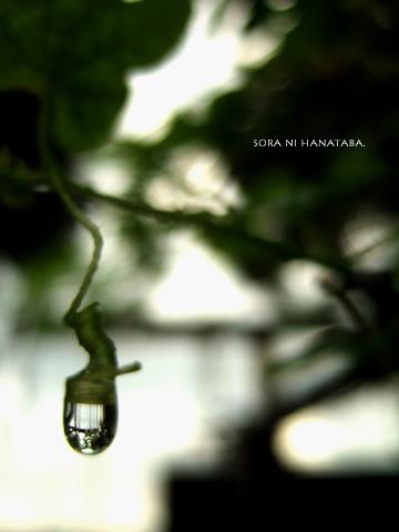 雨上がりの一瞬。