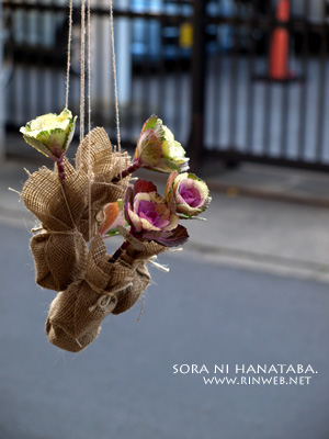 「ココロの葉牡丹」@船橋市