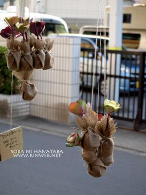 ココロの葉牡丹@花屋 空に花束