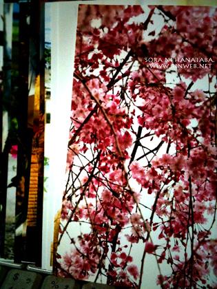 思い出の桜写真。