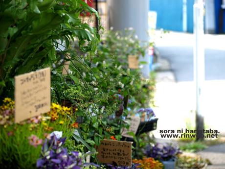 花屋 空に花束の船橋店にて(2011年8月7日)