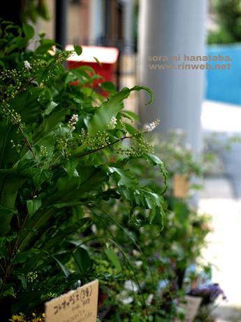 花屋/空に花束の船橋店にて(2011年8月7日)