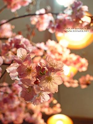 2012年桜(陽光桜)@柏市/花屋 空に花束