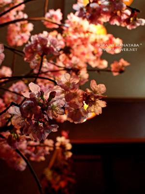 桜をみて。