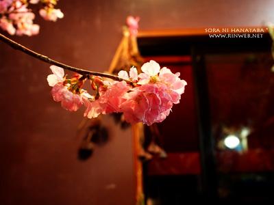桜@柏市/花屋 空に花束