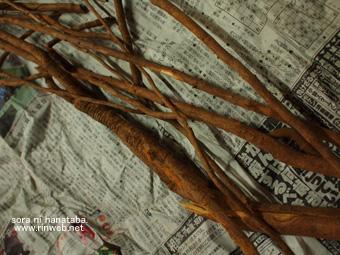 ニッキの根を。(熊本から)
