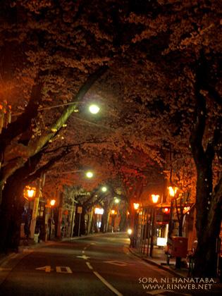 八柱から五香へ向かう桜道、夜桜を見に。@松戸市