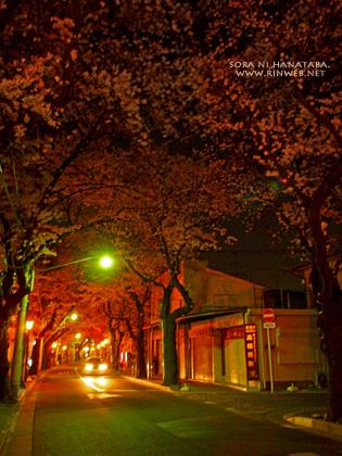 日本の道100選@千葉県松戸市さくら通り/花屋 空に花束