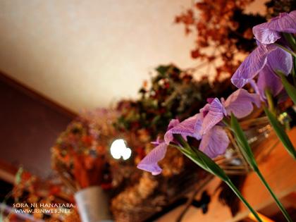 ハナショウブ(紫雲)