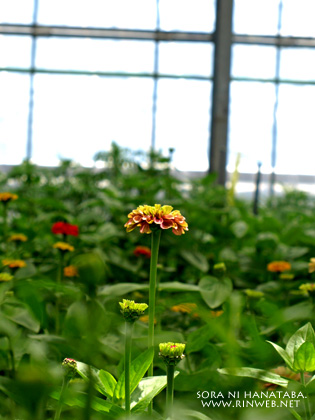 フラワーガーデン寺尾さんにて/花屋空に花束